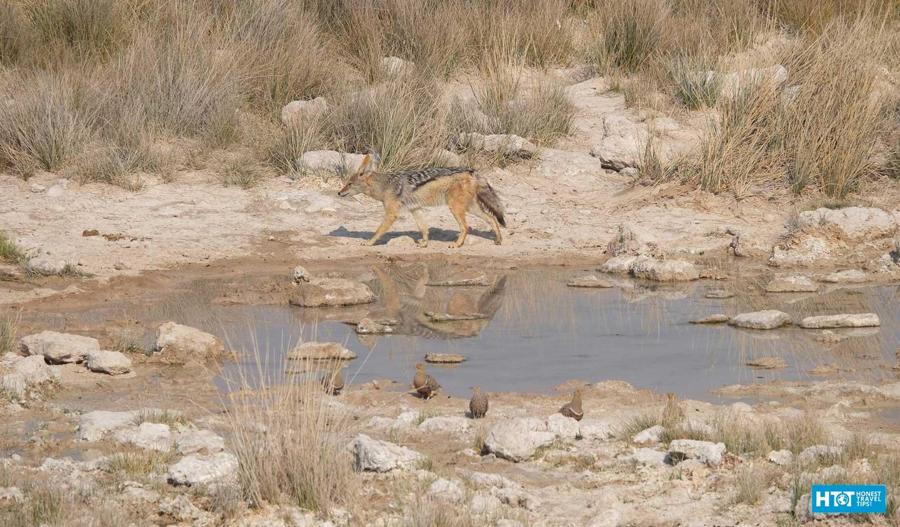 Namibia Travel Tips + Photos - HonestTravelTips com