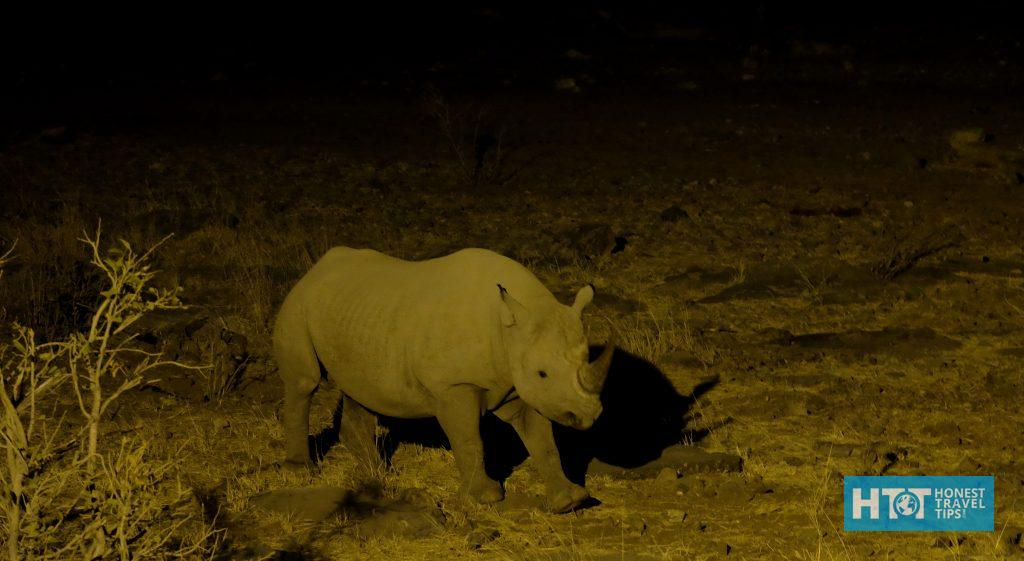 Rhino sighting near our camp in the night.