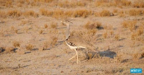 Namibia-29