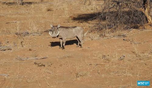 Namibia-33