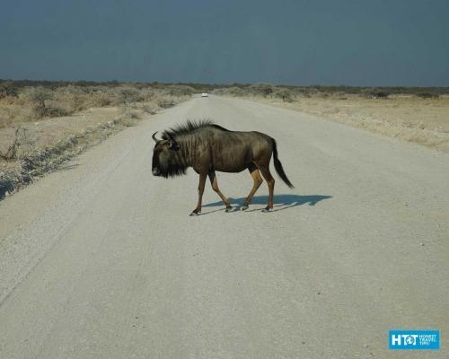 Namibia-45