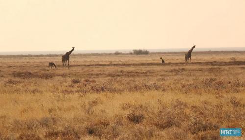 Namibia 46